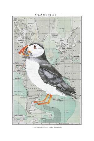 https://imgc.artprintimages.com/img/print/atlantic-puffin_u-l-pymwbo0.jpg?p=0