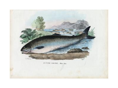 Atlantic Salmon, 1863-79-Raimundo Petraroja-Giclee Print