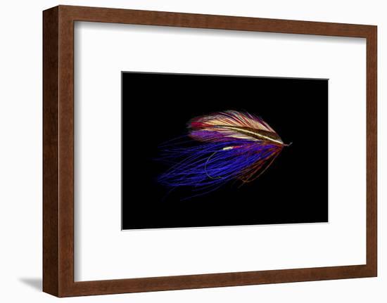 Atlantic Salmon Fly designs 'Iris Spey'-Darrell Gulin-Framed Photographic Print