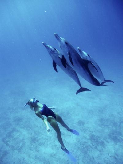 Atlantic Spotted Dolphins, Bimini, Bahamas-Greg Johnston-Photographic Print