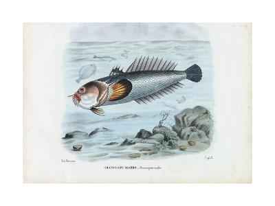 Atlantic Stargazer, 1863-79-Raimundo Petraroja-Giclee Print