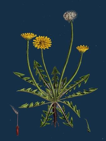 https://imgc.artprintimages.com/img/print/atriplex-littoralis-var-marina-grass-leaved-sea-orache-var-b_u-l-pvsq2z0.jpg?p=0