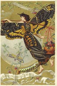Atropos Acherontia, Solanum Dulcamara, Eau Des Carmes Boyer Perfume Victorian Trade Card