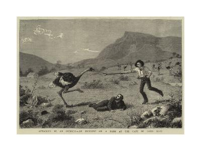 Attacked by an Ostrich, an Incident on a Farm at the Cape of Good Hope--Giclee Print