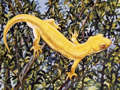 Auckland Green Gecko (Naultinus Elegans Elegans), Gekkonidae, Yellow Morph--Giclee Print