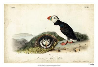 Audubon Arctic Puffin-John James Audubon-Giclee Print