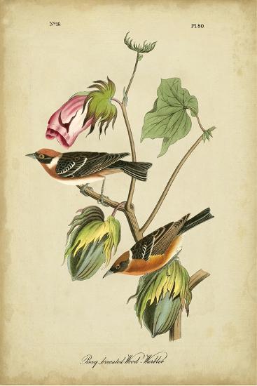 Audubon Bay Breasted Warbler-John James Audubon-Art Print