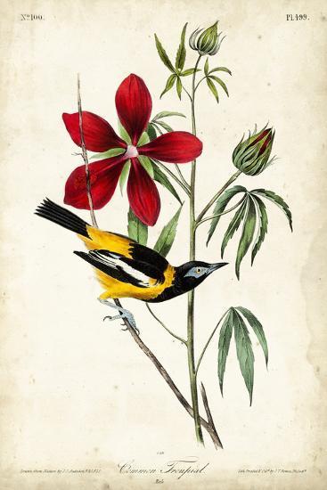 Audubon Bird & Botanical I-John James Audubon-Art Print