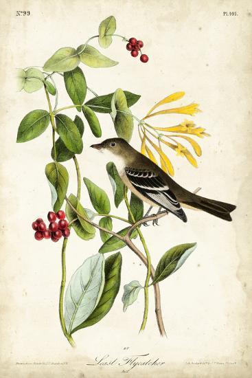 Audubon Bird & Botanical II-John James Audubon-Art Print