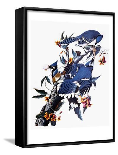 Audubon: Blue Jay-John James Audubon-Framed Art Print