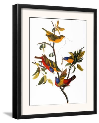 Audubon: Bunting, 1827-John James Audubon-Framed Giclee Print