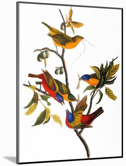Audubon: Bunting, 1827-John James Audubon-Mounted Premium Giclee Print