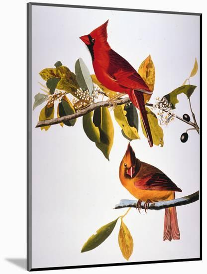 Audubon: Cardinal-John James Audubon-Mounted Premium Giclee Print