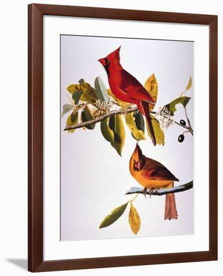 Audubon: Cardinal-John James Audubon-Framed Premium Giclee Print