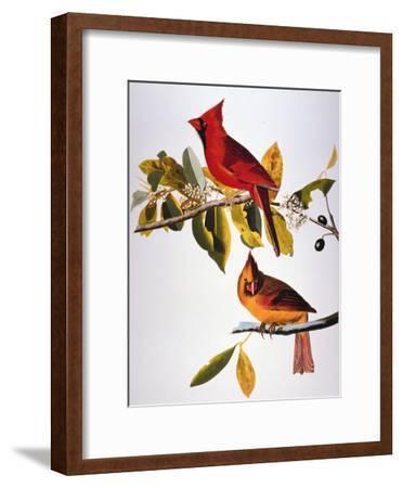 Audubon: Cardinal-John James Audubon-Framed Giclee Print