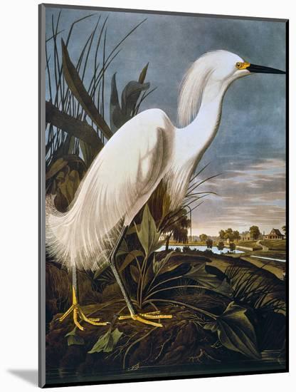 Audubon: Egret-John James Audubon-Mounted Premium Giclee Print