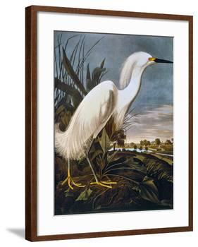 Audubon: Egret-John James Audubon-Framed Giclee Print