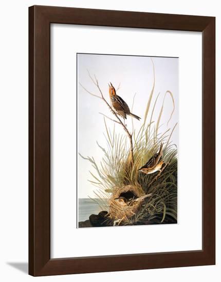 Audubon: Finch-John James Audubon-Framed Premium Giclee Print