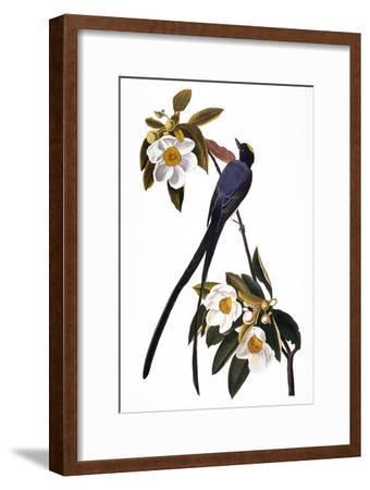 Audubon: Flycatcher, 1827-John James Audubon-Framed Giclee Print