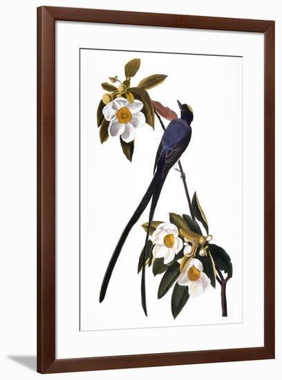 Audubon: Flycatcher, 1827-John James Audubon-Framed Premium Giclee Print