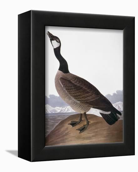 Audubon: Goose, 1827-John James Audubon-Framed Premier Image Canvas