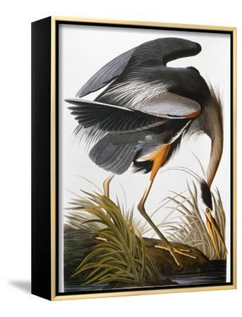 Audubon: Heron-John James Audubon-Framed Canvas Print