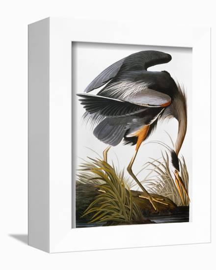Audubon: Heron-John James Audubon-Framed Premier Image Canvas