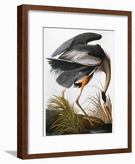 Audubon: Heron-John James Audubon-Framed Giclee Print