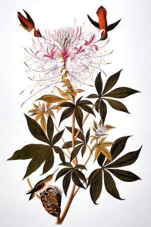 https://imgc.artprintimages.com/img/print/audubon-hummingbird_u-l-q1g8e1n0.jpg?p=0