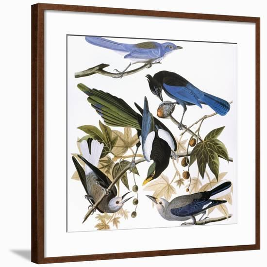 Audubon: Jay And Magpie-John James Audubon-Framed Giclee Print