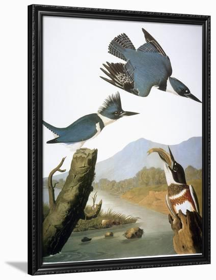 Audubon: Kingfisher, 1827-John James Audubon-Framed Giclee Print