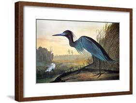 Audubon: Little Blue Heron-John James Audubon-Framed Giclee Print