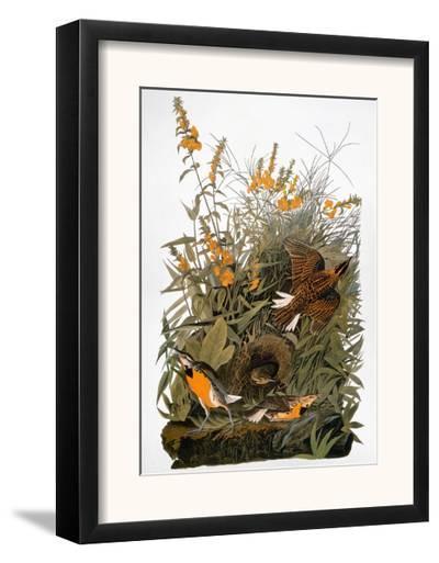 Audubon: Meadowlark-John James Audubon-Framed Giclee Print