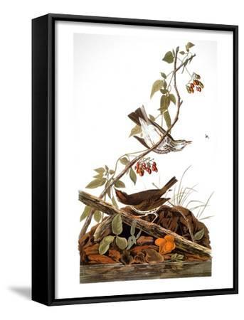 Audubon: Ovenbird-John James Audubon-Framed Art Print