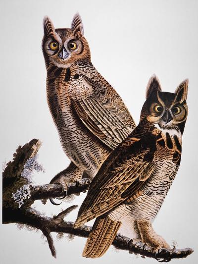 Audubon: Owl-John James Audubon-Giclee Print