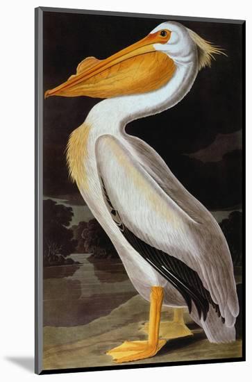 Audubon: Pelican-John James Audubon-Mounted Giclee Print