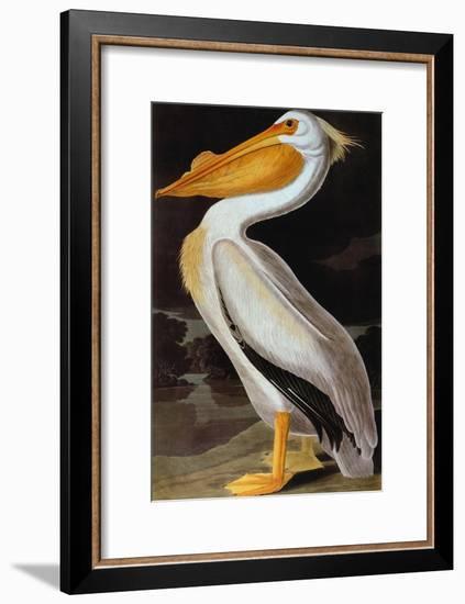 Audubon: Pelican-John James Audubon-Framed Giclee Print