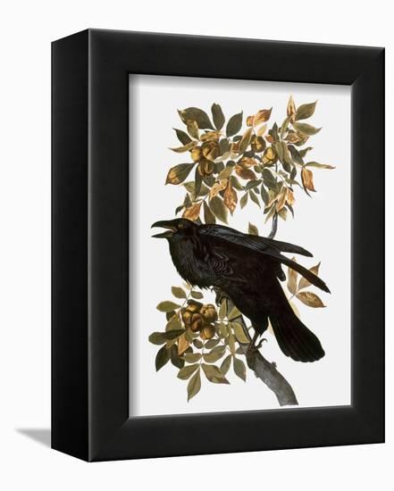Audubon: Raven-John James Audubon-Framed Premier Image Canvas