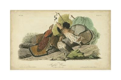 Audubon Ruffed Grouse-John James Audubon-Art Print