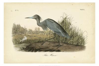 Audubon's Blue Heron-John James Audubon-Art Print