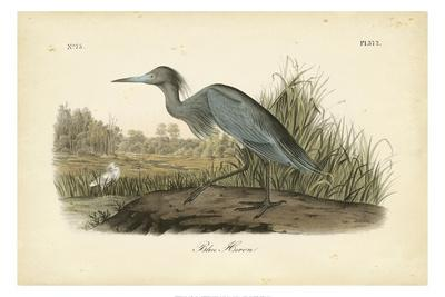 https://imgc.artprintimages.com/img/print/audubon-s-blue-heron_u-l-q1ga34l0.jpg?p=0