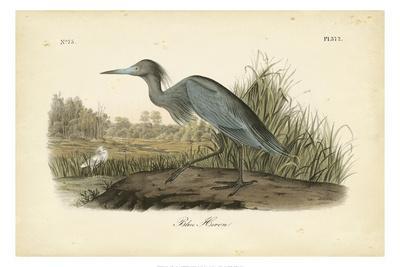 https://imgc.artprintimages.com/img/print/audubon-s-blue-heron_u-l-q1ga35u0.jpg?p=0