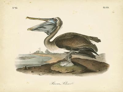 Audubon's Brown Pelican-John James Audubon-Art Print