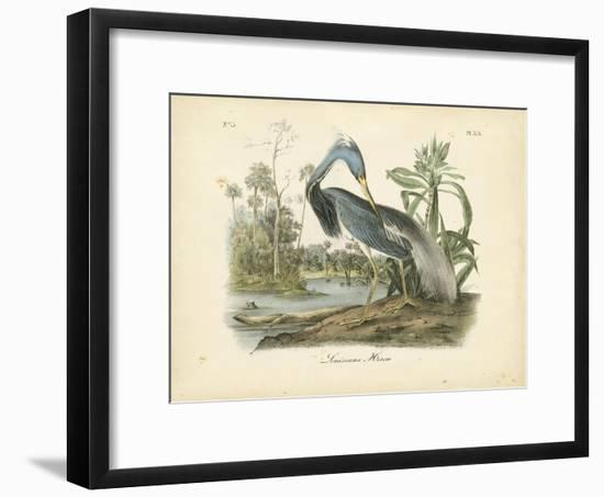 Audubon's Louisiana Heron-John James Audubon-Framed Premium Giclee Print