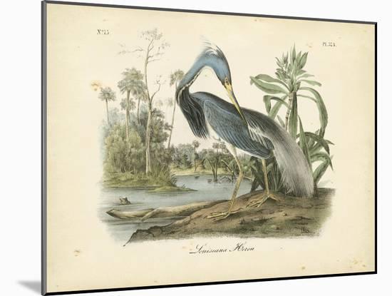Audubon's Louisiana Heron-John James Audubon-Mounted Art Print