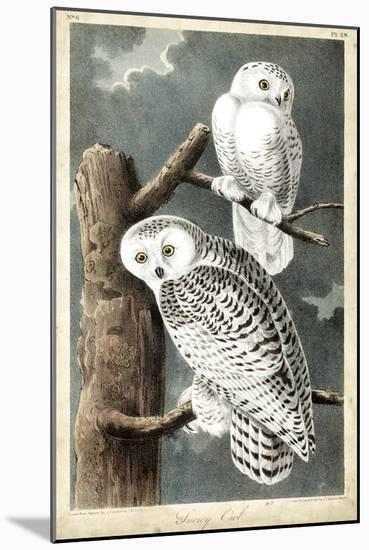 Audubon's Snowy Owl-John James Audubon-Mounted Art Print