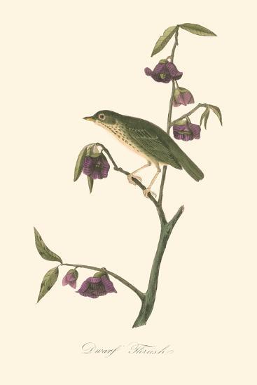 Audubon's Thrush-John James Audubon-Art Print