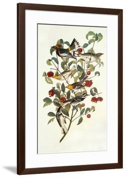Audubon's Warbler-John James Audubon-Framed Premium Giclee Print