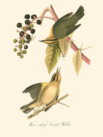 Audubon's Warbler-John James Audubon-Art Print