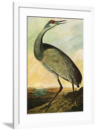 Audubon Sandhill Crane Bird--Framed Art Print